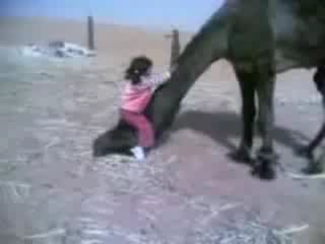 little girl climbing her self the camel